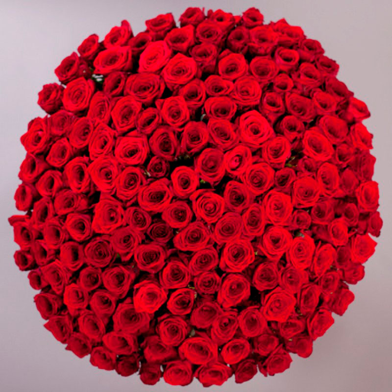 Букет из 151 бордовой розы «BIG LOVE»