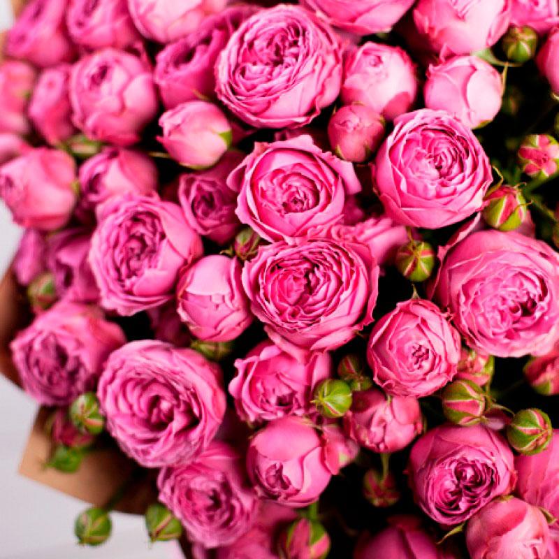 Букет из 25-ти кустовых роз «Мисти баблс»