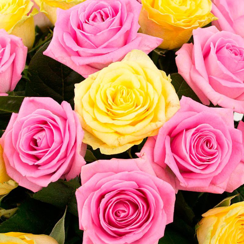 Букет из 35 роз «Малышка на миллион»