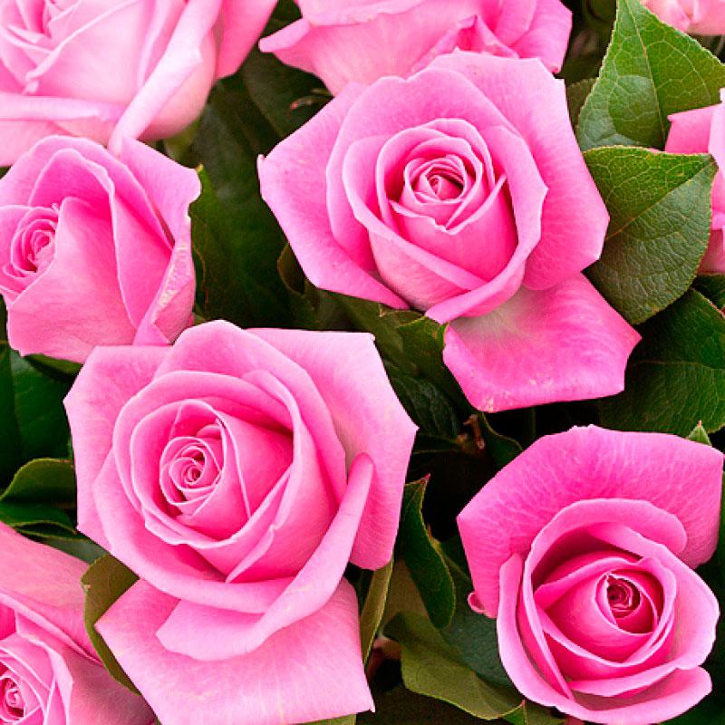 Букет из 31 розы «Элегантная классика»