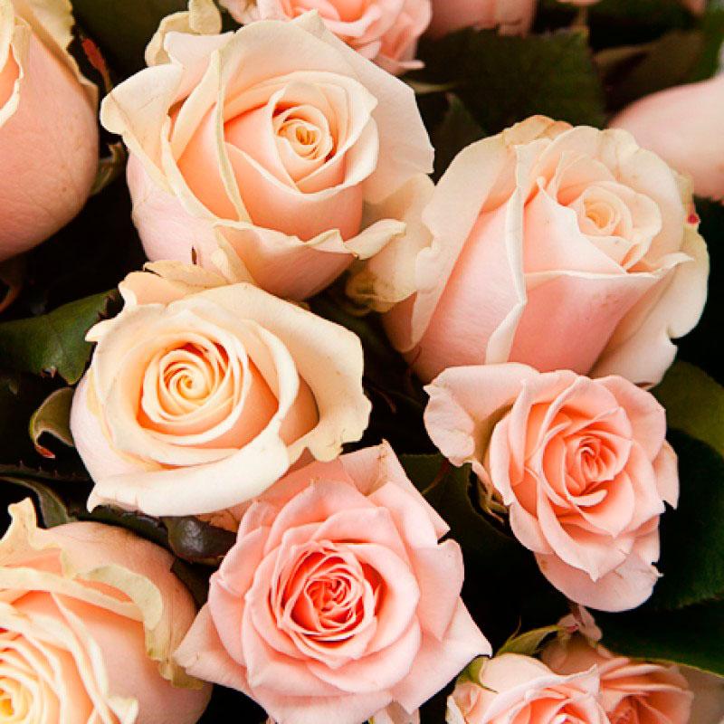 Букет роз «Манхэттен» (средний)