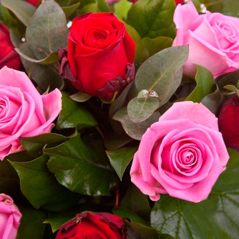 Букет роз «Светская дама» из 15 роз с зеленью