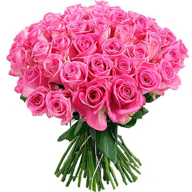 Роза сорта Аква