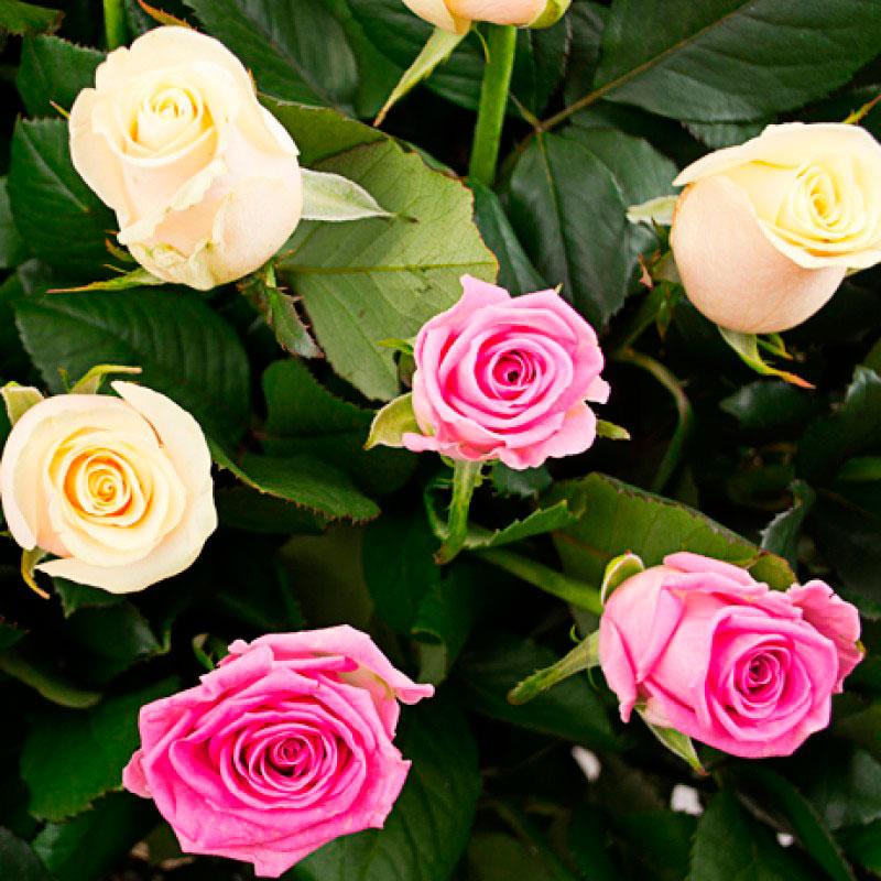 Корзина из 125 роз «Восхищение»
