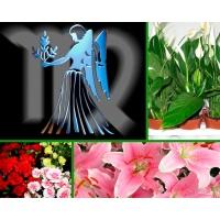 Цветы по знаку зодиака. Дева